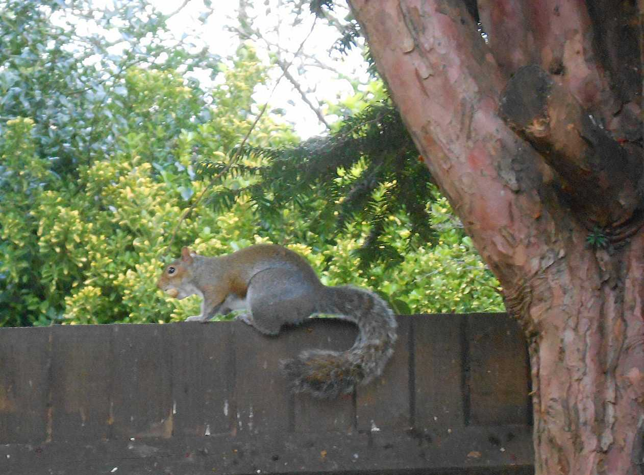 Squirrels are such fun for the cats!