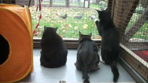 Watching the birds!